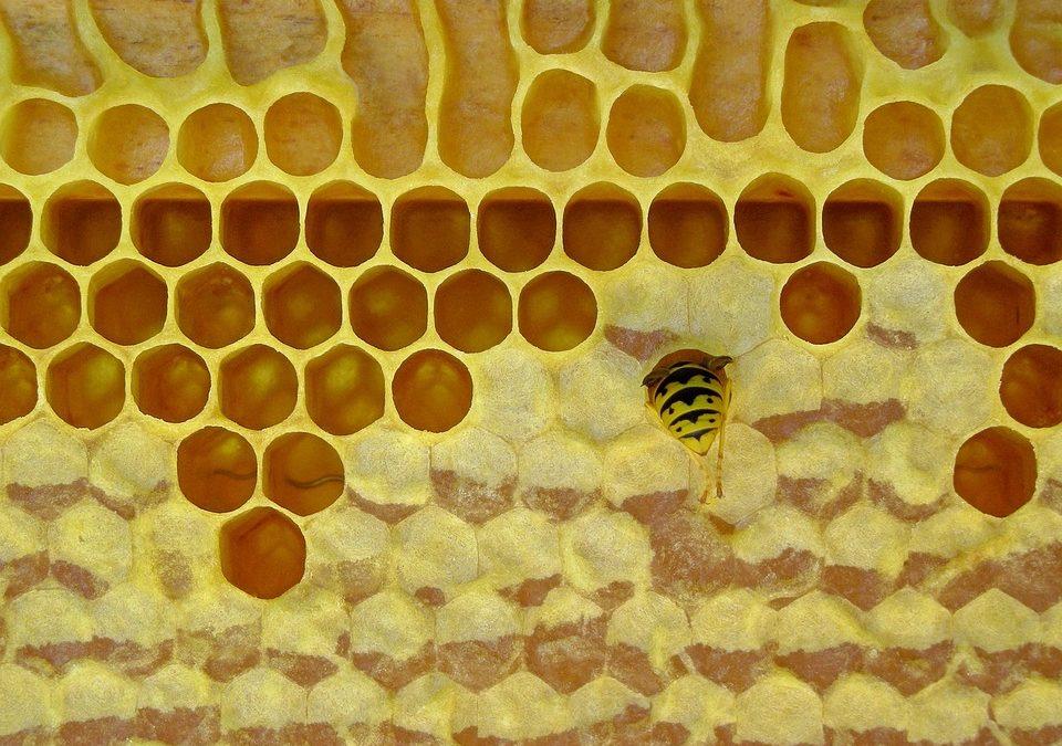 Des recettes maison de crème et de baume pour les mains et les lèvres à la cire d'abeille